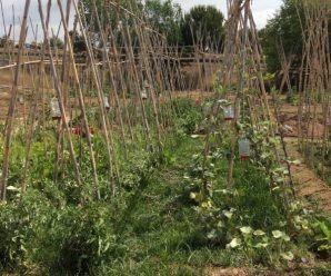 ENtutorado en huerto ecológico