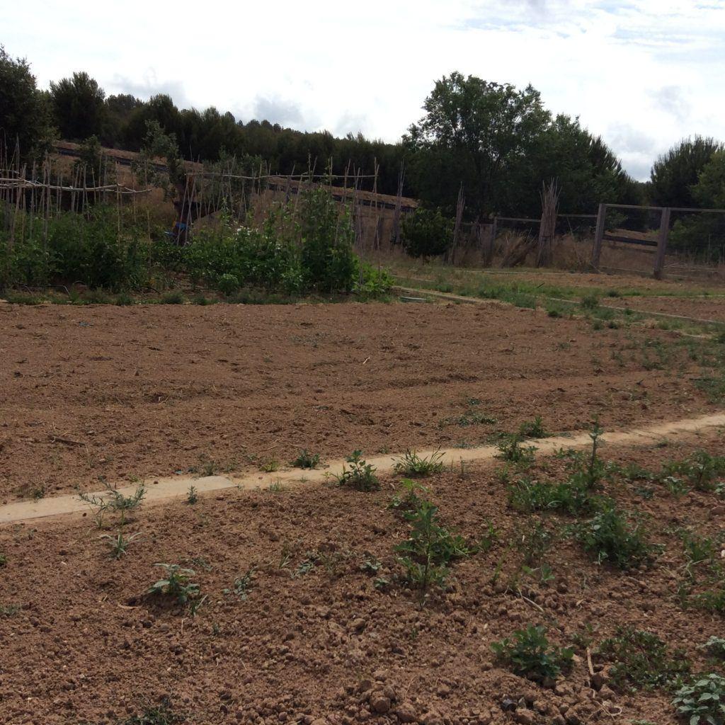 huerto ecológico Sant Pere de Ribes