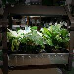 Huertos con poco sol. Qué plantas del huerto requieren poca luz