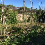 Cómo pasar de huerto convencional a ecológico
