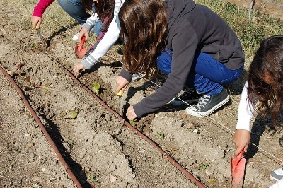 Alumnos del IES Villablanca trabajando en el huerto escolar
