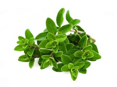 Cómo cultivar Albahaca: propiedades y cuidados