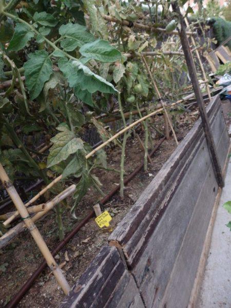 Bancales con tablillas de bancos de madera. Reciclar en el huerto