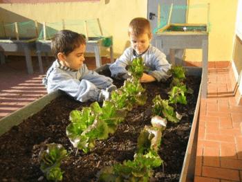 huertos en barcelona: huertos escolares