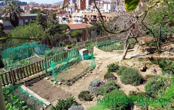 """Huerto urbano Barcelona """"Hort de l'avi"""""""