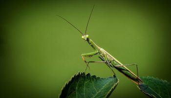 bichos verdes