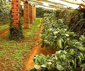 Huertos subterráneos: cultivar todo el año de forma sostenible. Bolivia