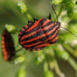 Bichos rojos en las plantas: ¿Cómo identificar y eliminar?