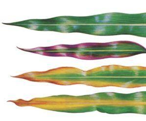 Nutrientes que necesitan las plantas. Algunos trucos para detectar su carencia.