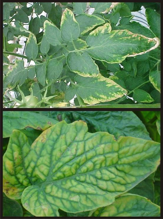 Nutrientes que necesitan las plantas algunos trucos para for Potasio para plantas