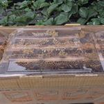 5 formas de atraer abejas y otros polinizadores beneficiosos para el huerto