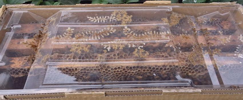 atraer abejas al huerto