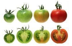 madurar frutos