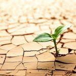 Estrés hídrico en las plantas. Síntomas y soluciones.