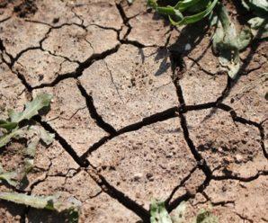 Sequía. Estrés hídrico