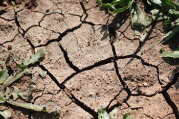 Hojas secas a causa de la falta de agua