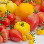 Tipos de Tomates más cultivados
