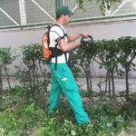 Herramientas Eléctricas para el Jardín: qué son y cuáles son sus ventajas