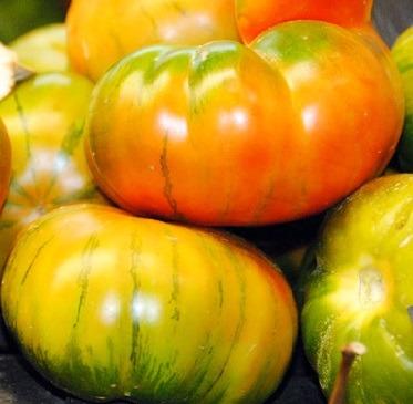 Tomates variedad Muchamiel