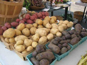 tipos de patatas