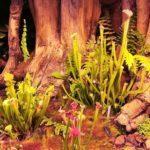 Plantas carnívoras: 4 plantas que te pueden ayudar a controlar las plagas