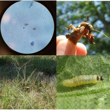 organismos bioagresores