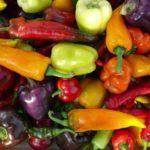 Tipos de Pimientos. Las 5 variedades más cultivadas en el huerto