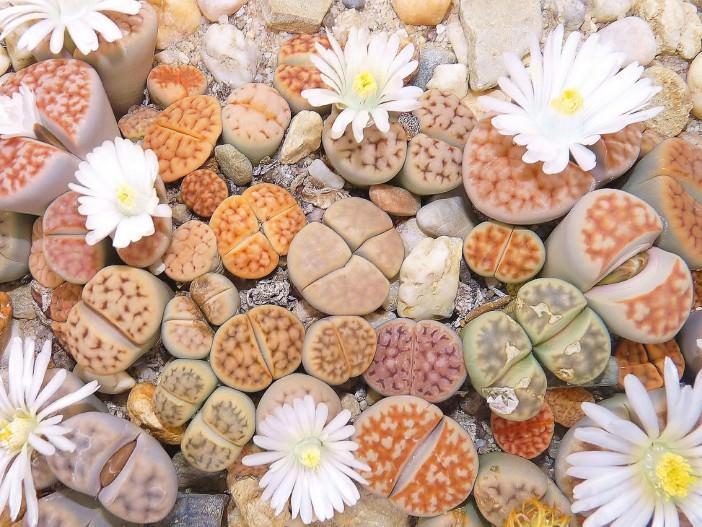 plantas raras y plantas originales