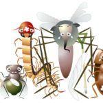 Insectos comunes del huerto y del jardin.  Las 11 plagas más dañinas