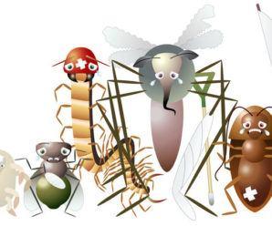 plagas del huerto e insecticidas naturales
