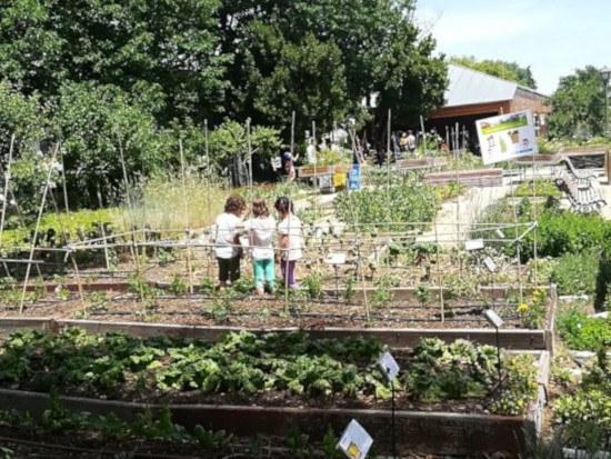 Huerto escolar ecológico