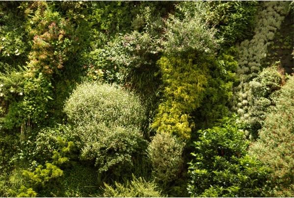Detalle y variedad de especies en un jardín vertical