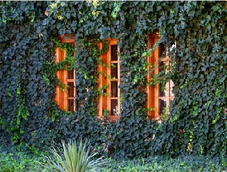 Jardín vertical continuo de enredaderas.