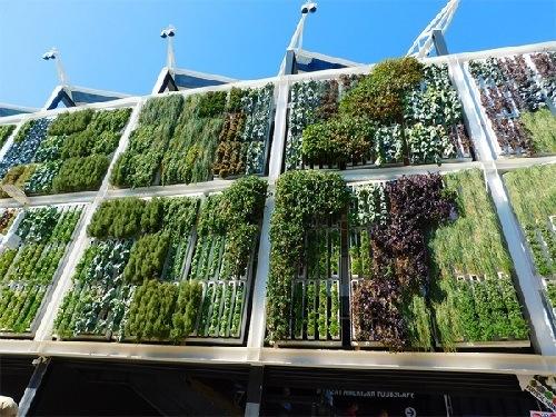 Jardines verticales todo lo que necesitas saber for Modulo jardin vertical