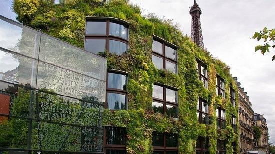 Jardines verticales todo lo que necesitas saber for Historia de los jardines verticales
