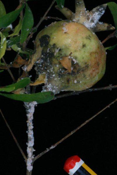 Insectos comunes del huerto y del jardin las 11 plagas for Insectos del jardin