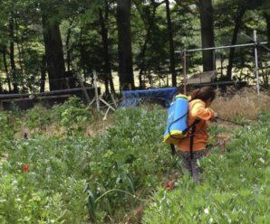 Cómo cuidar las plantas del huerto
